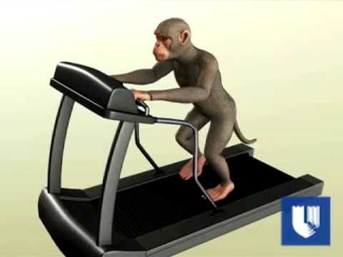 Mind Control Monkey Moves Robot in Japan