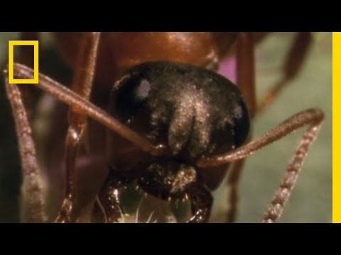 Parasitic Mind Control | National Geographic