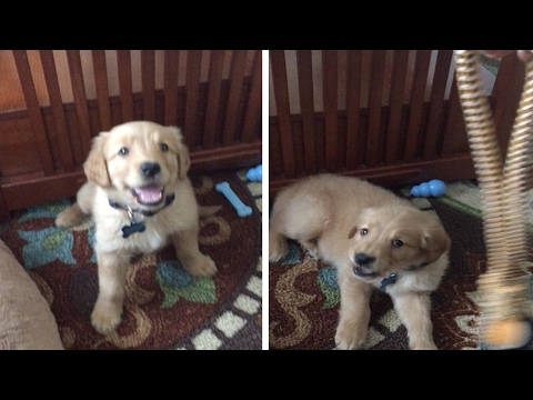 Puppy Not Fooled By Hypnosis